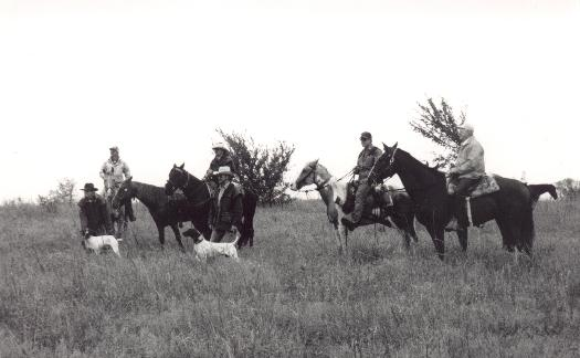 Horses with riders and dogs in the field